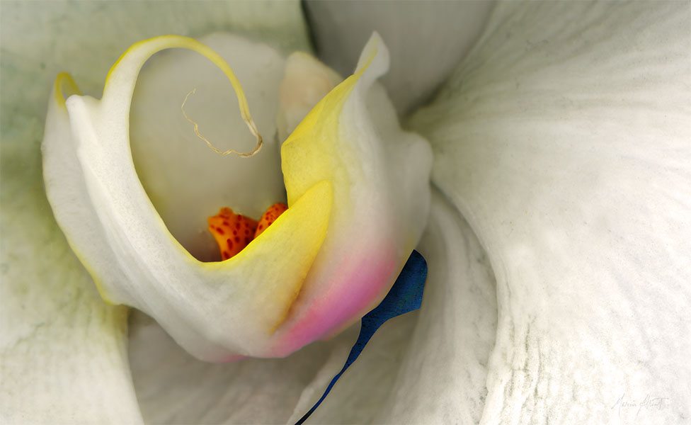 "<center>Emergence (2008) 31""x51""<br/>(printed dimensions variable)</center><br/>