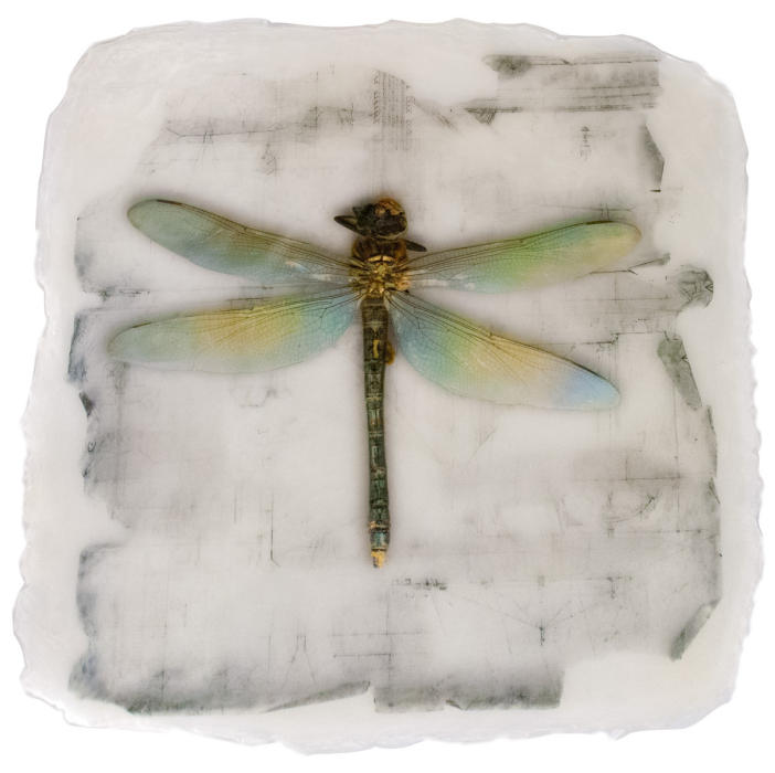 "<center>Blue Dragonfly (2018) 16""x15""<br/> alternative media on handmade transparent acrylic skin<br/>