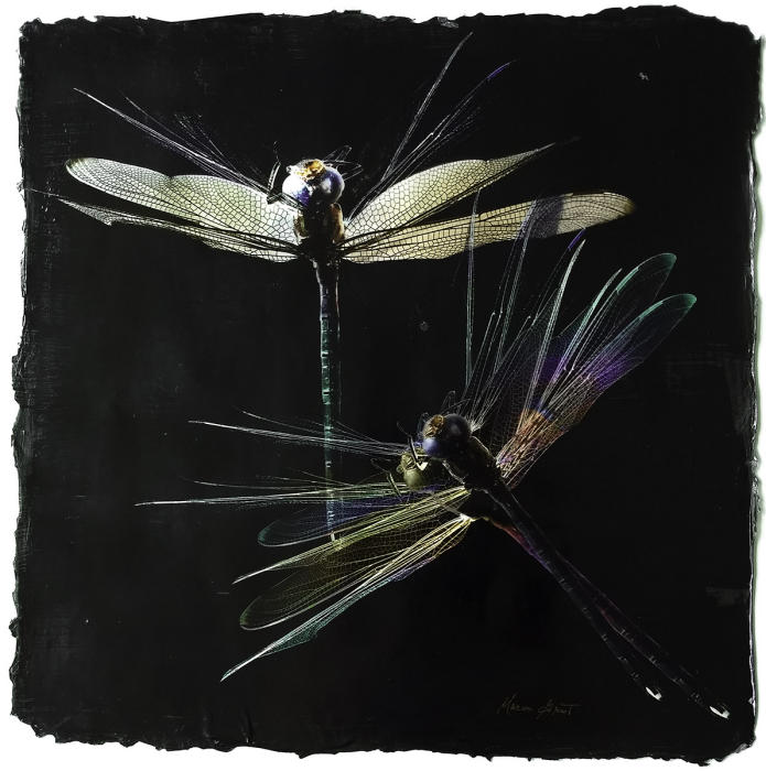 "<center>Dragonflies in Motion l (2018) 14""x14""<br/>alternative media on handmade acrylic skin<br/>